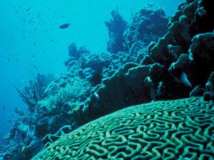 Atractivos de Isla Mujeres 6