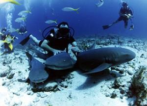 tiburones01