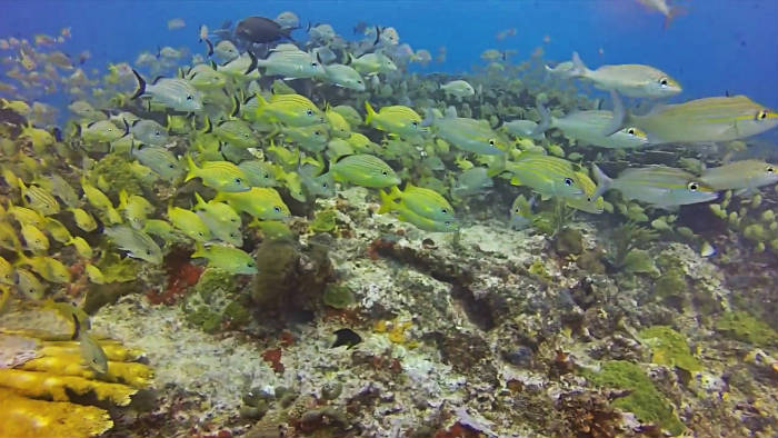 Bucear en el Arrecife de Manchones