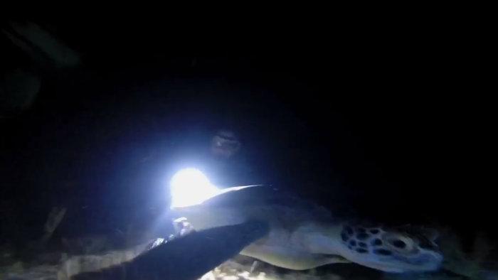 Buceo nocturno en Isla Mujeres
