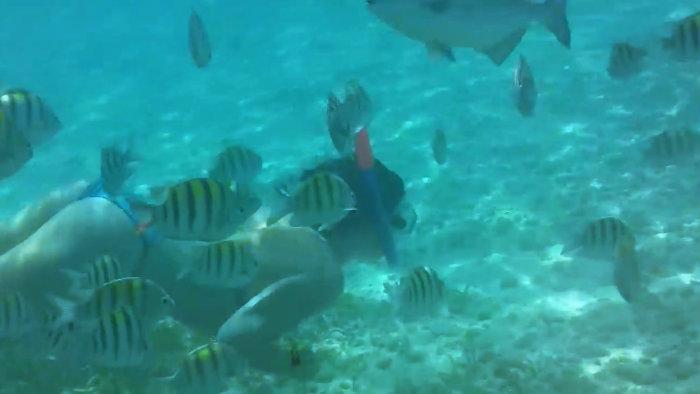 Snorkel con peces en Isla mujeres