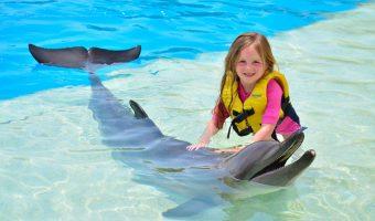 Isla Mujeres nado con delfines