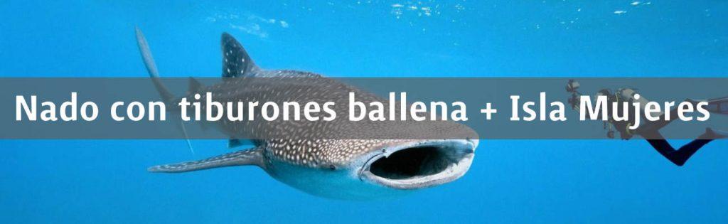 Nado con tiburones ballena + Isla Mujeres